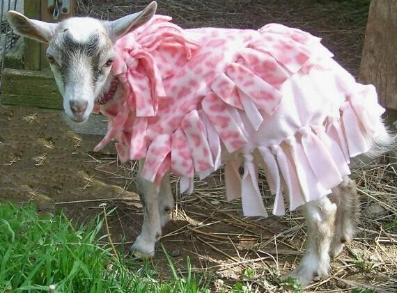 Pink Leopard Goat Coat