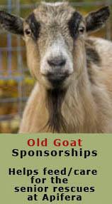 Sponsor the Old Goats of Apifera