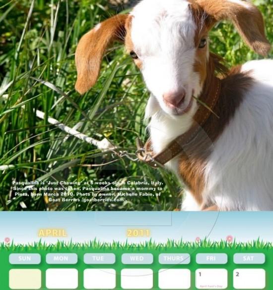 Pasqualina's calendarial debut